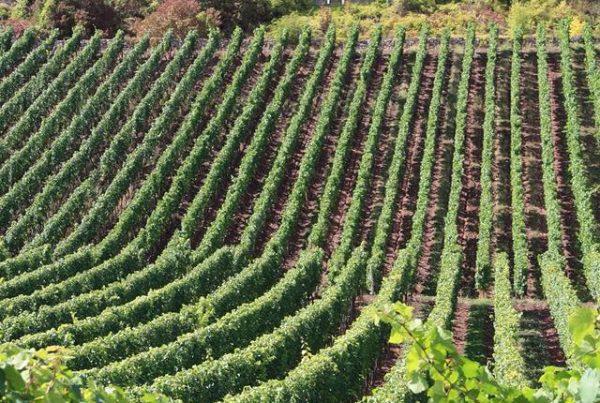wijnmakerij-blog-wilco